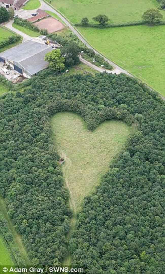 Ông lão tự tay trồng cả rừng cây tưởng nhớ vợ, 17 năm sau người ta mới phát hiện bí mật bất ngờ - Ảnh 3.