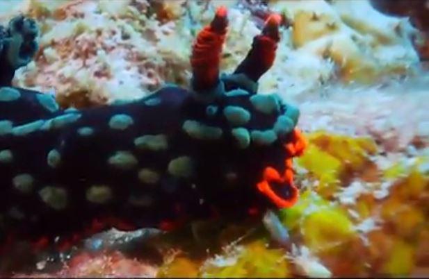 Xuống lòng đại dương sâu thẳm khám phá những sinh vật kỳ lạ như ở ngoài hành tinh - Ảnh 4.