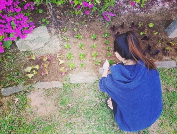 Khu vườn rau sạch xinh xắn của vợ chồng tài tử Bae Yong Joon trong biệt thự triệu đô - Ảnh 9.