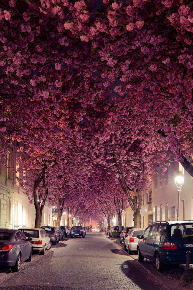 Nín thở ngắm nhìn những con phố đẹp nhất trên thế giới - Ảnh 25.
