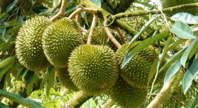 Hóa ra những trái cây chúng ta ăn thường ngày lại ẩn chứa nhiều điều thú vị - Ảnh 6.