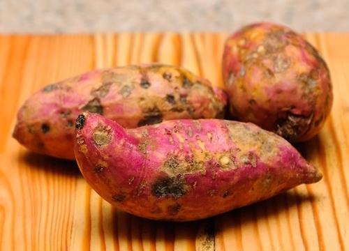 Ăn khoai lang giúp giảm cân nhưng thấy khoai thế này thì đừng dại mà ăn, coi chừng ngộ độc - Ảnh 2.
