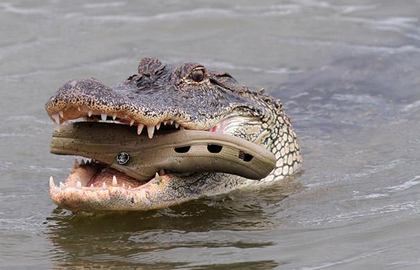 Không nhịn được cười với những khoảnh khắc tẽn tò của động vật - Ảnh 17.