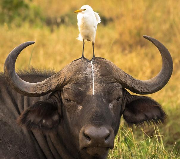 Không nhịn được cười với những khoảnh khắc tẽn tò của động vật - Ảnh 19.