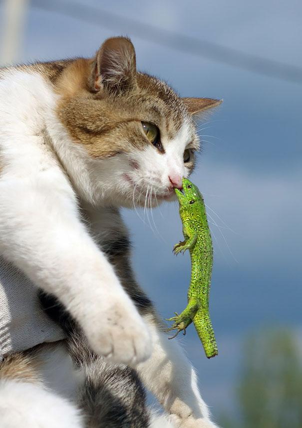 Không nhịn được cười với những khoảnh khắc tẽn tò của động vật - Ảnh 21.