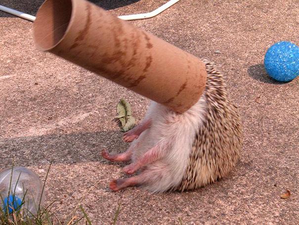 Không nhịn được cười với những khoảnh khắc tẽn tò của động vật - Ảnh 28.
