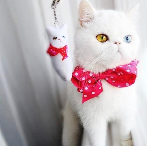 Mắc bệnh hiếm gặp, nàng mèo sở hữu 2 màu mắt tuyệt đẹp   - Ảnh 4.