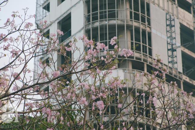 Một ngày nắng chói chang, ngắm hoa kèn hồng để thấy lòng lịm mát giữa Sài Gòn - Ảnh 1.