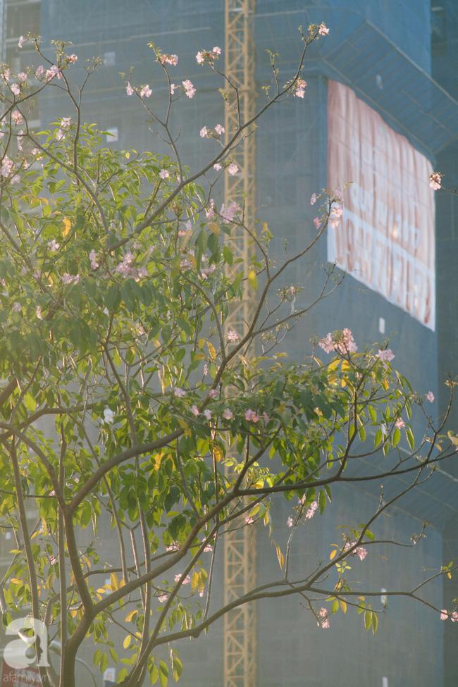 Một ngày nắng chói chang, ngắm hoa kèn hồng để thấy lòng lịm mát giữa Sài Gòn - Ảnh 8.