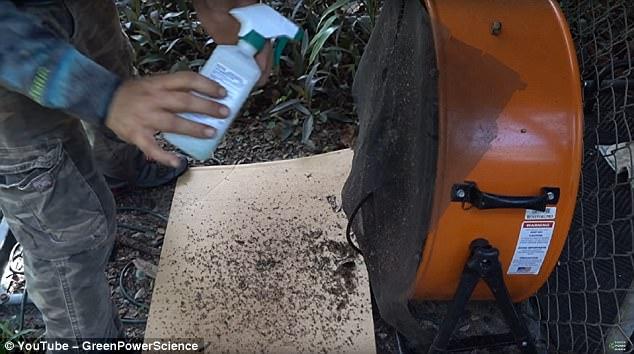 Khó tin nhưng có thật: Dùng chó làm mồi nhử, tiêu diệt 8000 con muỗi trong 2 đêm - Ảnh 3.