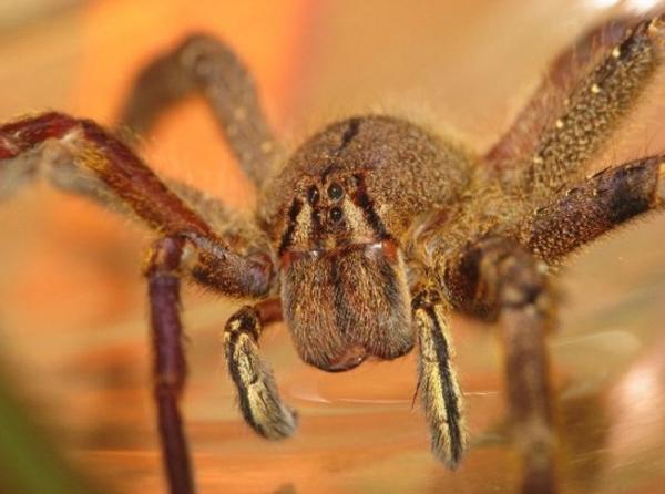 Sinh vật bé nhỏ trú ngụ ngay trong căn nhà bạn có thể gây phát ban, hoại tử mà ít ai để ý - Ảnh 3.