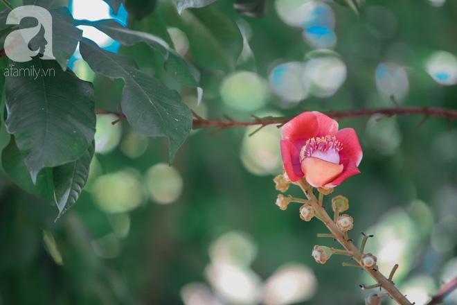 Ghé Huế, vào chùa Thiên Mụ 400 năm tuổi ngắm những đóa sala - hoa của sự yên lành - ảnh 4