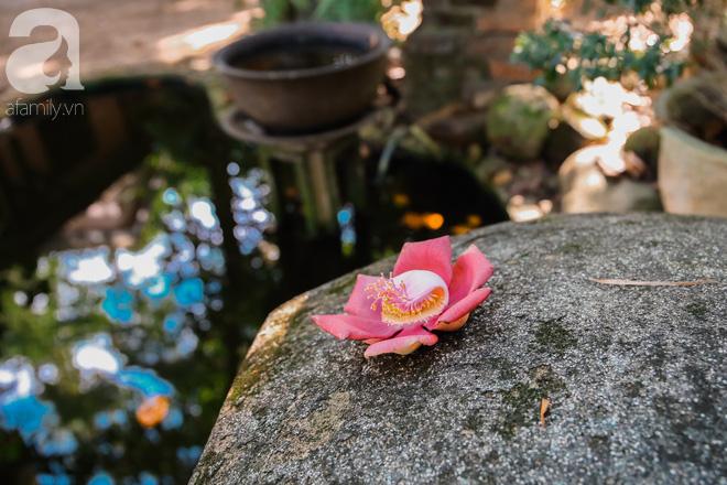 Ghé Huế, vào chùa Thiên Mụ 400 năm tuổi ngắm những đóa sala - hoa của sự yên lành - ảnh 9