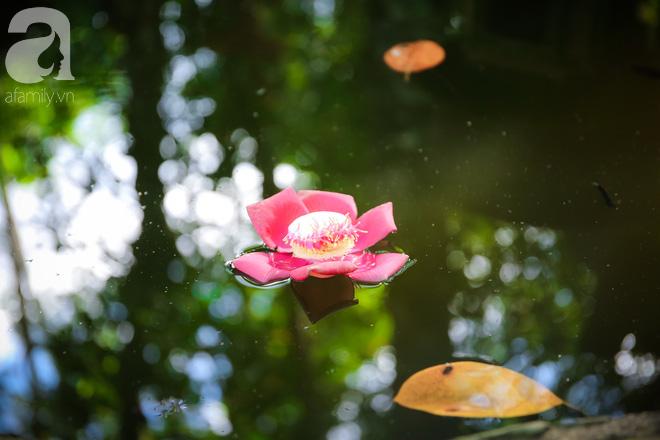 Ghé Huế, vào chùa Thiên Mụ 400 năm tuổi ngắm những đóa sala - hoa của sự yên lành - ảnh 5