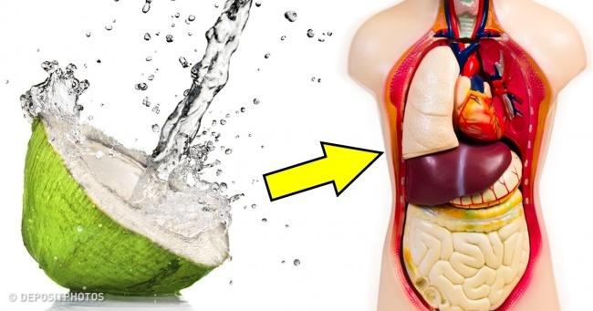 Uống nước dừa trong 1 tuần, bạn sẽ thấy 7 điều kì diệu này xảy ra với cơ thể - Ảnh 1.