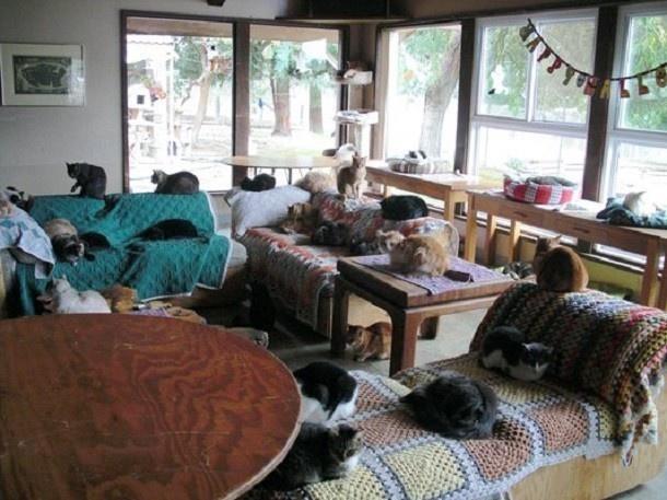 Người phụ nữ nhận hơn 1.000 con mèo về làm thú cưng - Ảnh 4.