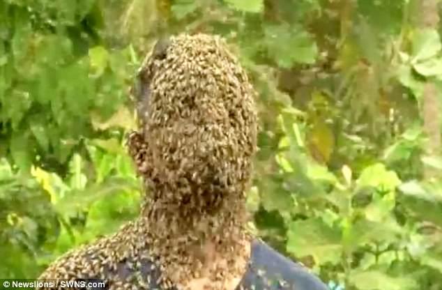 Kinh dị người đàn ông để 60.000 con ong bu kín mặt vẫn bình thản đọc sách - Ảnh 4.