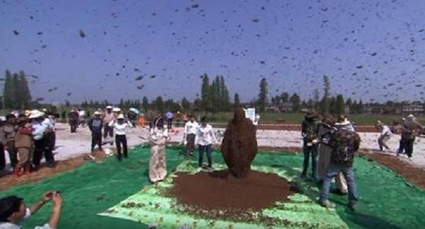 Kinh dị người đàn ông để 60.000 con ong bu kín mặt vẫn bình thản đọc sách - Ảnh 6.