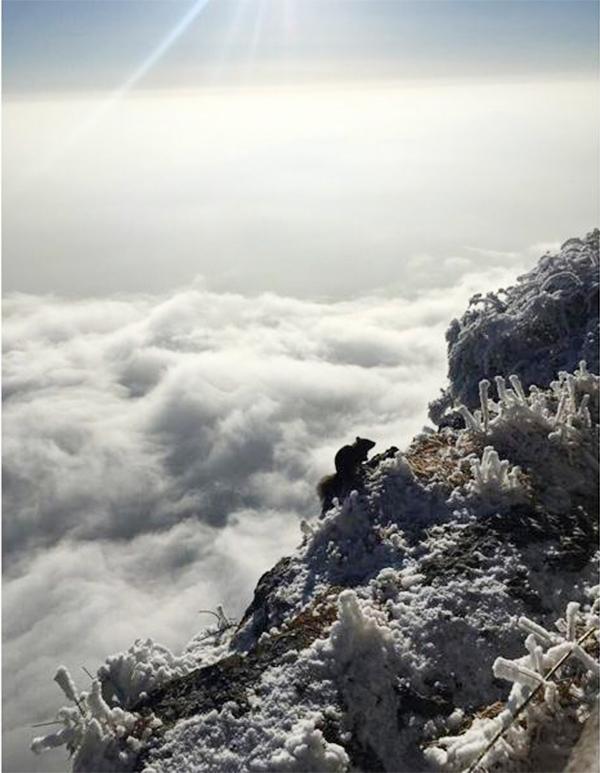 Tuyết phủ trắng núi Nga Mi - Ảnh 7.