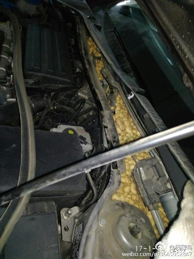 Cả năm trời cóp nhặt lạc sống trong ô tô, chú chuột đáng thương bị chủ xe lột sạch ngay trước Tết - Ảnh 2.