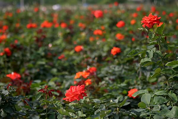 4 làng hoa đẹp long lanh ngay ven Hà Nội nên ghé đến để cảm nhận rõ