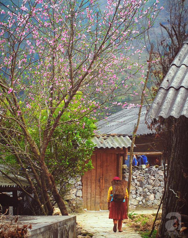 Ngẩn ngơ ngắm sắc trắng, sắc hồng của hoa mận, hoa đào ở Hà Giang - Ảnh 1.
