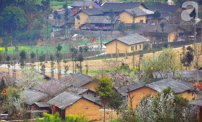 Ngẩn ngơ ngắm sắc trắng, sắc hồng của hoa mận, hoa đào ở Hà Giang - Ảnh 2.