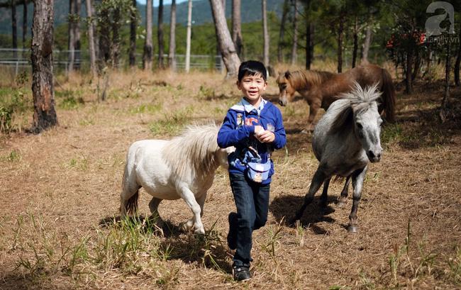 Đến Đà Lạt, nhất định hãy cùng gia đình ghé thăm quán cafe kiêm sở thú đẹp như ở trời Tây này - Ảnh 7.