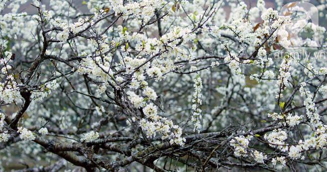 4 điểm đến đẹp như mơ, nhất định nên đến để cảm nhận trọn vẹn cảnh sắc tháng 2 - Ảnh 4.