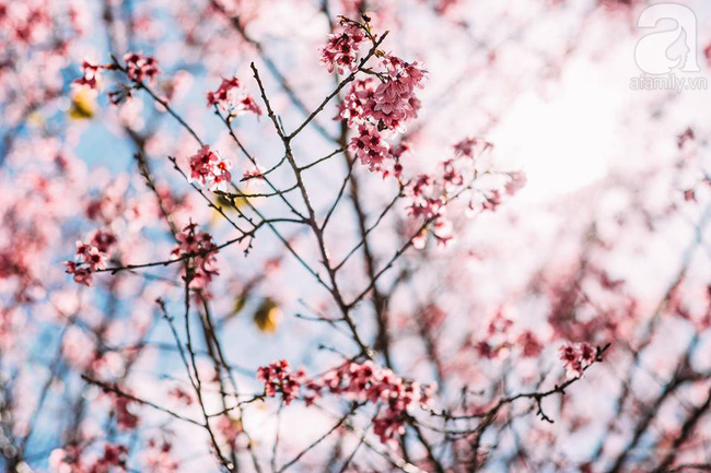 4 điểm đến đẹp như mơ, nhất định nên đến để cảm nhận trọn vẹn cảnh sắc tháng 2 - Ảnh 8.
