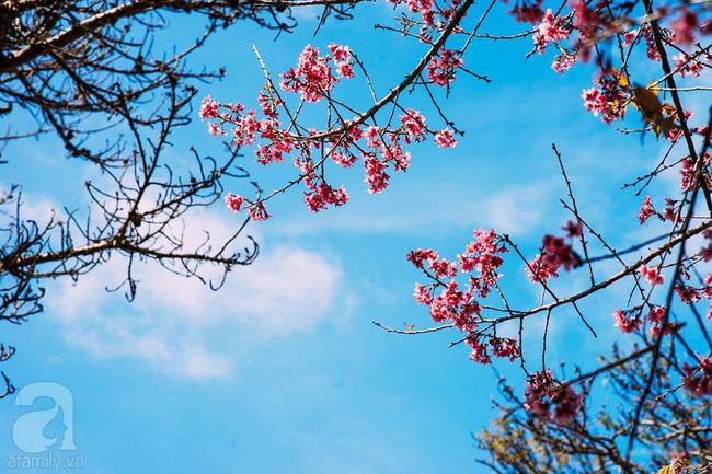 4 điểm đến đẹp như mơ, nhất định nên đến để cảm nhận trọn vẹn cảnh sắc tháng 2 - Ảnh 11.