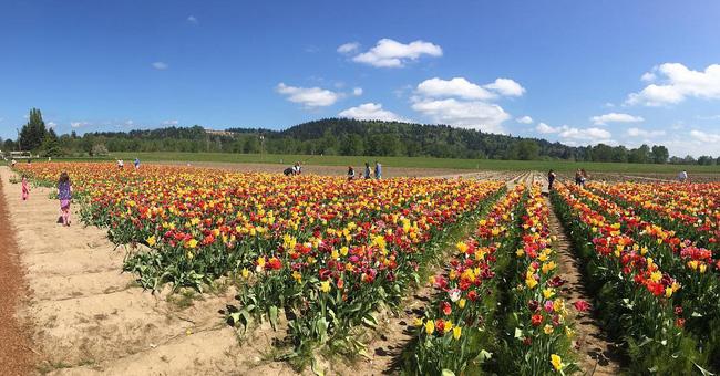 6 khu vườn hoa tulip chỉ nhìn thôi cũng khiến người ta ngất ngây bởi quá đẹp, quá rực rỡ - Ảnh 24.