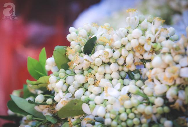 Hãy tận hưởng mùa hoa sưa và hoa bưởi đẹp đến say lòng người