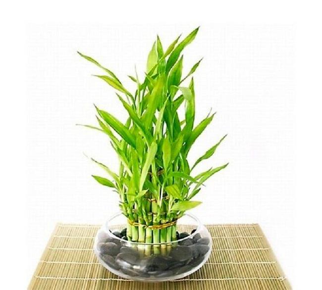 10 loài cây cảnh vô cùng phù hợp để trồng trong ngôi nhà của mình - Ảnh 8.