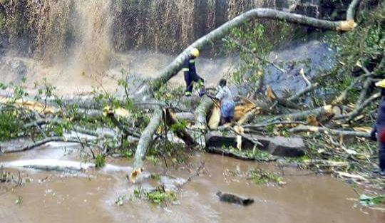 Bị cây rơi từ trên thác đè trúng, 20 người chết - Ảnh 1.