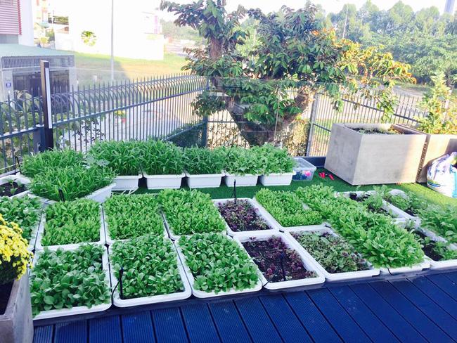 Khu vườn trên sân thượng xanh mướt mát, ăn mãi chẳng hết rau sạch của gia đình Lý Hải - Minh Hà - Ảnh 1.