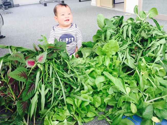 Khu vườn trên sân thượng xanh mướt mát, ăn mãi chẳng hết rau sạch của gia đình Lý Hải - Minh Hà - Ảnh 3.