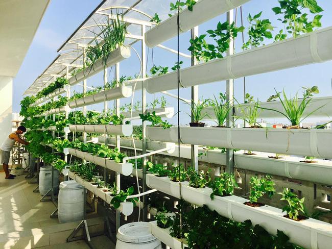Khu vườn trên sân thượng xanh mướt mát, ăn mãi chẳng hết rau sạch của gia đình Lý Hải - Minh Hà - Ảnh 6.
