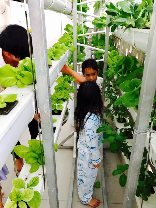Khu vườn trên sân thượng xanh mướt mát, ăn mãi chẳng hết rau sạch của gia đình Lý Hải - Minh Hà - Ảnh 9.