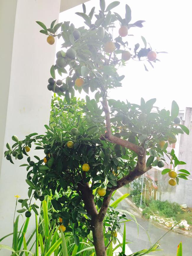 Khu vườn trên sân thượng xanh mướt mát, ăn mãi chẳng hết rau sạch của gia đình Lý Hải - Minh Hà - Ảnh 12.
