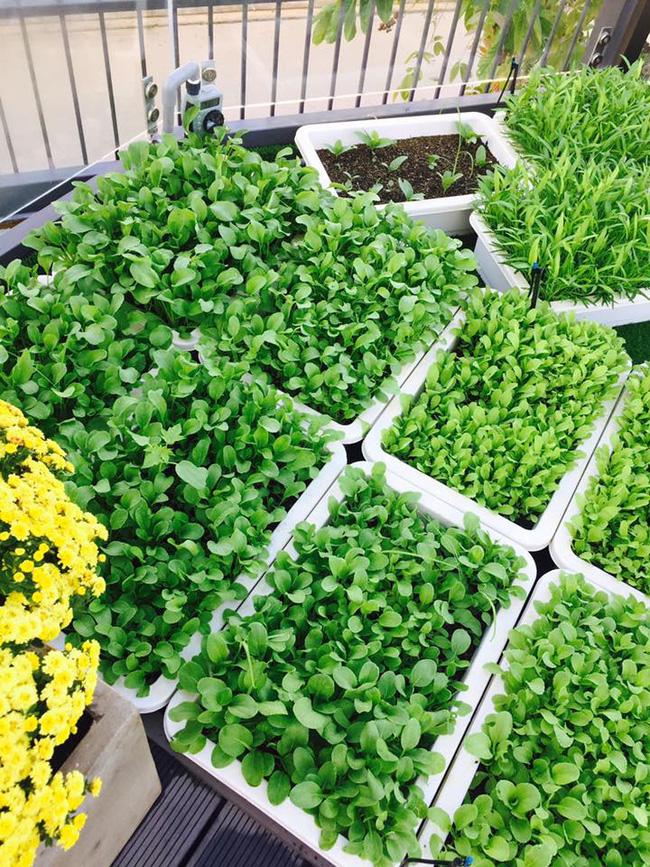 Khu vườn trên sân thượng xanh mướt mát, ăn mãi chẳng hết rau sạch của gia đình Lý Hải - Minh Hà - Ảnh 10.