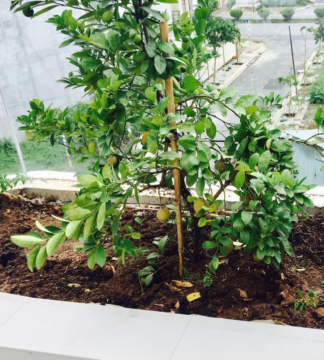 Khu vườn trên sân thượng xanh mướt mát, ăn mãi chẳng hết rau sạch của gia đình Lý Hải - Minh Hà - Ảnh 13.