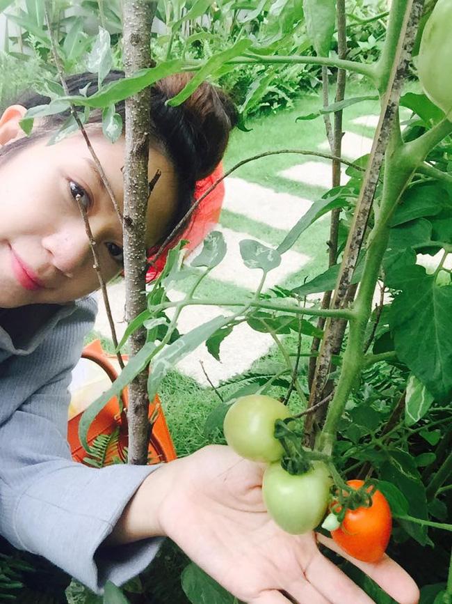 Khu vườn trên sân thượng xanh mướt mát, ăn mãi chẳng hết rau sạch của gia đình Lý Hải - Minh Hà - Ảnh 11.