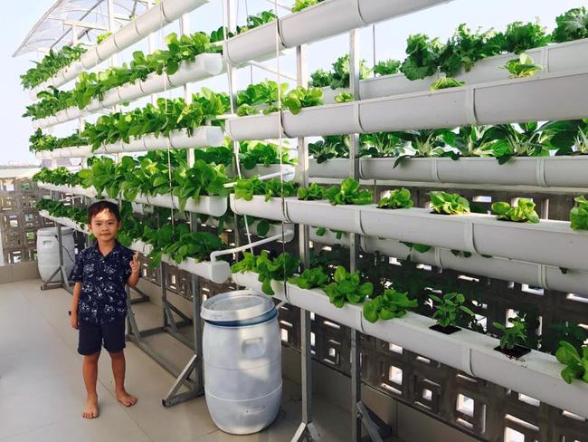 Khu vườn trên sân thượng xanh mướt mát, ăn mãi chẳng hết rau sạch của gia đình Lý Hải - Minh Hà - Ảnh 18.