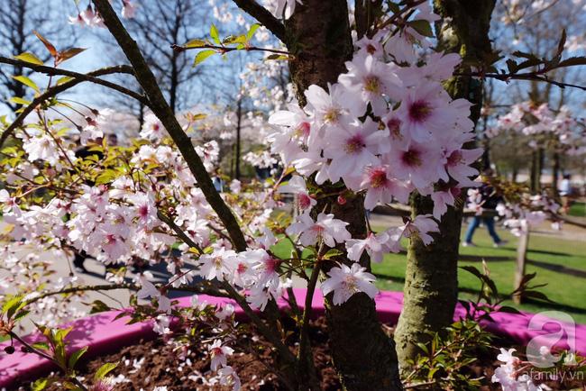 Lạc vào thiên đường hoa 7 triệu bông, một năm chỉ mở cửa một lần - Ảnh 8.