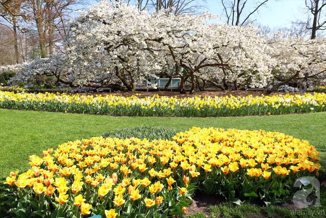 Lạc vào thiên đường hoa 7 triệu bông, một năm chỉ mở cửa một lần - Ảnh 12.