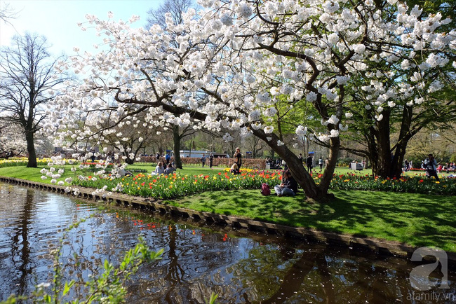 Lạc vào thiên đường hoa 7 triệu bông, một năm chỉ mở cửa một lần - Ảnh 14.