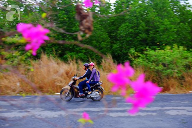 Ven Sài Gòn, có một con đường thơ mộng ngập tràn hoa giấy - Ảnh 4.