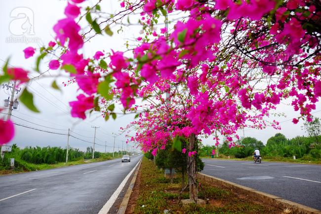 Ven Sài Gòn, có một con đường thơ mộng ngập tràn hoa giấy - Ảnh 2.