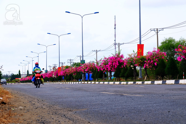 Ven Sài Gòn, có một con đường thơ mộng ngập tràn hoa giấy - Ảnh 7.